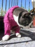 Кошки и коты - схемы для вязания и вышивки.  Прочитать целикомВ. шапка...