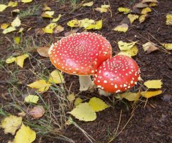 magic mushrooms locations