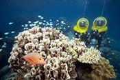 Great Barrier Reef Cruise with Introductory Scuba Dive -