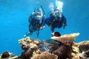 Outer Barrier Reef Cruise with Certified Scuba Dive Tanks and Weights Only -