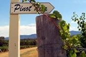 1 Day Hunter Valley Tour -