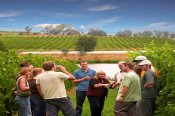 Yarra Valley Wine Experience with Lunch -