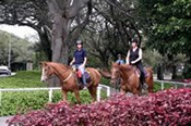 Horse Riding for Five in Centennial Park -
