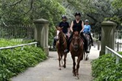 Horse Riding in Centennial Park -