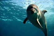 Dolphin and National Park Full Day Cruise -