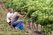 Adopt-A-Vine at a Local Winery -