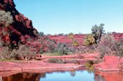 Palm Valley Tour - Alice Springs