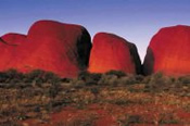 Alice Springs to Uluru One Way - Bushwalking, Nature & Wildlife