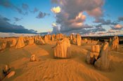 4WD Pinnacles, Beaches, Koalas and Sand Boarding Adventure - Bushwalking, Nature & Wildlife