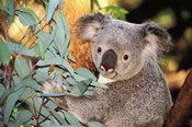 Scenic Cruise and Perth Zoo Combo -