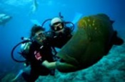 Outer Barrier Reef Cruise with Introductory Scuba Dive -