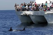 Dolphin Swim & Whale Watch Experiences