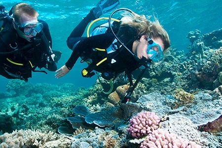 Moore Reef Outer Barrier Reef Cruise with Certified Scuba Dive - Scuba Diving & Snorkelling