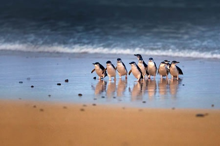 Phillip Island Nature Parks Combo Pass -