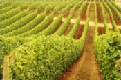 Full Day Gourmet Wine and Dine Tour in the Margaret River -
