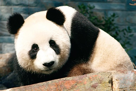 Morning Adelaide City Tour with River Cruise and Pandas -
