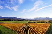 Premium Private Yarra Valley or Mornington Peninsula Winery Tour -