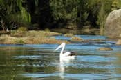 Nepean and Warragamba River Gorges Eco Tour -