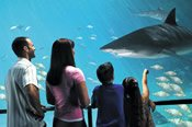 Sea World Theme Park Ticket -
