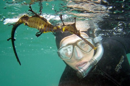 Snorkel with Seadragons Tour - Scuba Diving & Snorkelling
