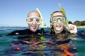 Snorkel with Seadragons Tour -