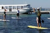 Stand Up Paddleboarding Seal and Penguin Island Tour -