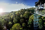 Bungy and Rainforest Scenic Heli Voyage -