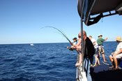 Deep Sea Fishing Adventure -