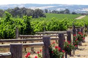 Exclusive McLaren Vale Full Day Tour - Barossa Valley