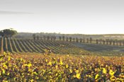 McLaren Vale Winery Experience -