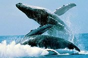 Whale Watching Adventure -