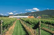Sky Diving Tandem and Winery Lunch Package -