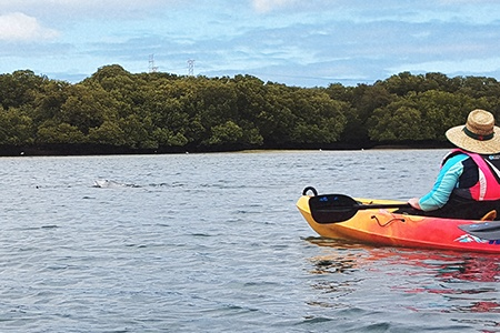 Dolphin Sanctuary and Ship Graveyard Kayaking Tour -