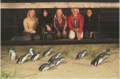 Phillip Island Penguin Parade Tour -