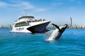 Full Day Gold Coast Whale Watching and Island Adventure -