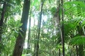 Guided Minyon Falls Rainforest Long Walking Tour -