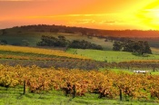 Barossa Valley Light Aircraft Scenic Flight -