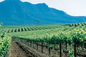 Hunter Valley Wine Tasting Tour -