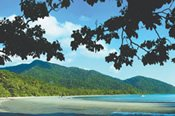 Cape Tribulation and Daintree Tour -