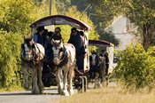 Swan Valley Horse Drawn Wagon Afternoon Vineyard Meander -
