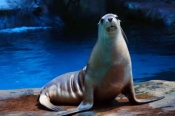 Day Visit at SEA LIFE Mooloolaba -