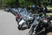 3.5 Hour Springbrook Eco Motorcycle Tour -