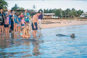 Monkey Mia Dolphins and Sharks Scenic Flight with Dolphin Feeding -