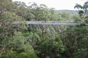 Albany Tree Top Walk Scenic Flight -