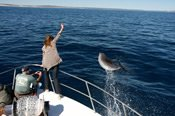 Kalbarri Dolphin Encounter Tour -