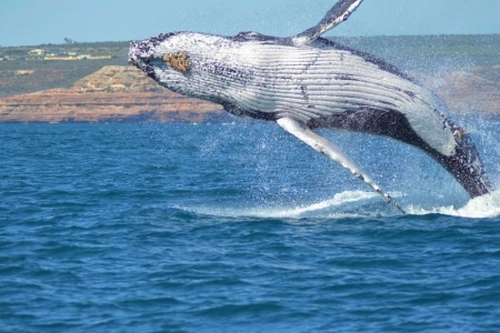 Kalbarri Whale Watching Tour - Dolphin & Whale Watch
