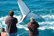 Kalbarri Whale Watching Tour -