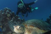 Learn to Dive PADI Open Water Course -