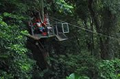 The Jungle Surfing Tour -
