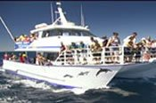 Sydney Harbour Whale Watching Cruise -